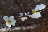 #雪化粧 #木の花 『積雪の朝』 - 自然感察 *nature feeling*