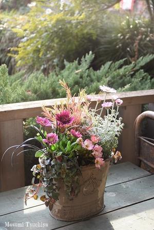 もうすぐ春ですね - この植物をお買い2