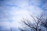 春待つ空 - purebliss