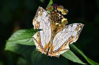 蝶々のファッション☆彡 - DAIGOの記憶