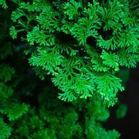 ・flat green foliage・ - - Foliage & Blooms Foto -