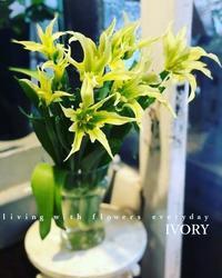 """""""グリーン トライアンファーター"""" -  Flower and cafe 花空間 ivory (アイボリー)"""