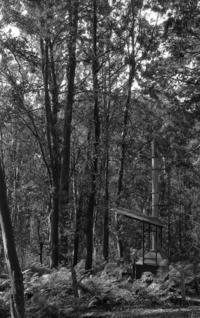 森の中にて - ページをめくるように