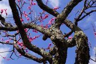 春は名のみの - kogomiの気ままな一コマ