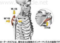 肩関節の使い方 - らくらく太極拳