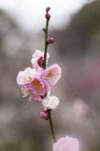 小石川植物園 - ことのは