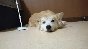 みかん、今日からトライアル! - Together with the dog  ~ ファンパウズ