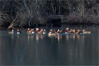 静かな湖畔@オシドリ - とことんデジカメ