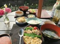 お昼は庭に出て虫など愛ずる - 島暮らしのケセラセラ