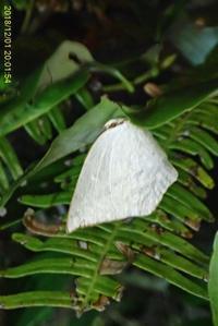 越冬蝶 - おらんくの自然満喫