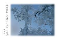 冬山路その⑲ - ゆきおのフォト俳句