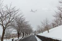 さくらの山雪景 - WiNGSCAPE