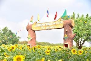 ロッブリーのひまわり畑 ~来シーズンに向けての備忘録~ - 明日はハレルヤ in Bangkok