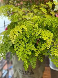 春からはじめる【グリーンのある暮らし】 - ルーシュの花仕事