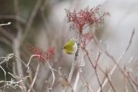 野鳥たち - 暮らしの中で