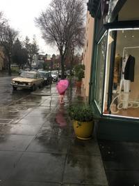 傘を買ってあげました - ブリアンヌのお散歩日記