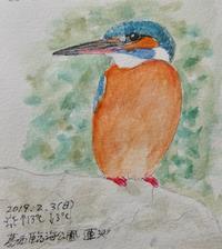 #野鳥スケッチ #ネイチャー・ジャーナル 『カワセミ』Kingfisher - スケッチ感察ノート (Nature journal)