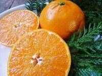 究極の柑橘『せとか』平成31年の出荷スタート!収穫の様子を現地取材!後編:今年も最高の美味さです! - FLCパートナーズストア