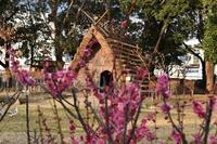 古代遺跡の梅 - 浜千鳥写真館