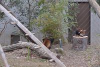 全員集合 - 動物園へ行こう