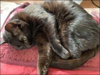 ドロボー猫 - あずきのばあばの、のんびり日記