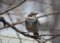 今日の鳥さん190213 - 万願寺通信