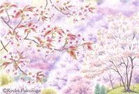 山桜の咲く頃 - Kyoko Fukunaga Blog