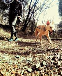 公園一周 - 愛犬タクと中年オヤジの気ままな日記