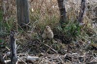 ■アリスイが大盤振る舞い19.2.16 - 舞岡公園の自然2