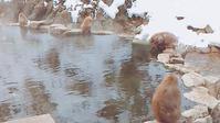 猿温泉に行ってきた!(湯田中・渋温泉)地獄谷野猿公苑 - 物欲買いの銭失い