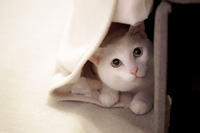 オモチャ か 追いかけっこ か かくれんぼ - Omoブログ