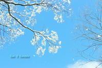 Sun 3 Sunday 雪の華編 - 虹のむこうには何が見える?