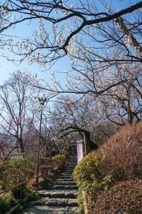 百草園の梅まつり〜① - 柳に雪折れなし!Ⅱ