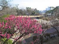 多摩川台公園の梅(2019) - AREKORE