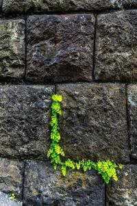 石垣の植物 - TW Photoblog