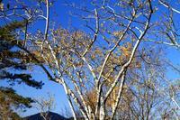 宝登山のソシンローバイ - お散歩写真     O-edo line