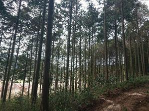 作業道下側無理矢理完了! - 自力施業型小規模森林所有者 奥山林業