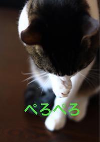 にゃんこ劇場「顔洗い」 - ゆきなそう  猫とガーデニングの日記