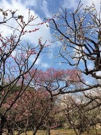 後楽園の梅 - ササイな日々