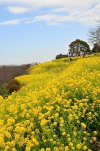 吾妻山…② - Taro's Photo