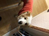探検隊ベルちゃん - 犬との穏やかな日々
