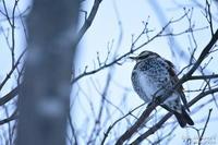 街路樹の鳥 - へたぴ~光画館
