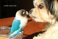 B.B & Chipo*ステキなフタリ☺はどうなる~?? - FUNKY'S BLUE SKY