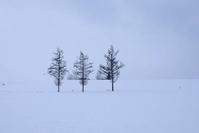 雪煙る日のマイルドセブンの丘VOL.3~2月の美瑛 - My favorite ~Diary 3~