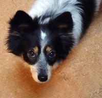 うちの犬世界一かわいい - 山田南平Blog