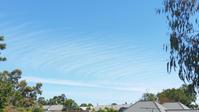 雲とブドウ - アデレードの片隅で2