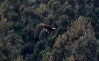 オシドリの里へ行ってきましたⅡ - 鳥撮りDAIRY