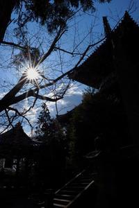 霊山寺 - ブナの写真日記