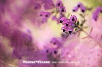 春を求めて・・♪ - Flores*Flores