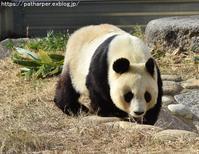 2019年2月王子動物園2その2ミンファとお別れ - ハープの徒然草